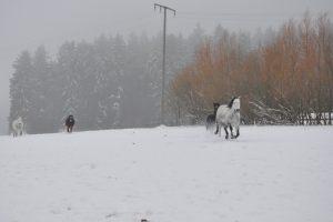 munz-winter-027